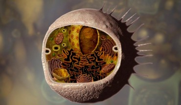 human_cells